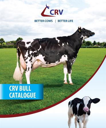 Cattle Genetics Breeding Supplements, Fertility Supplements in Kenya